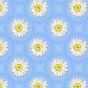 white-daisy-tiled-blue