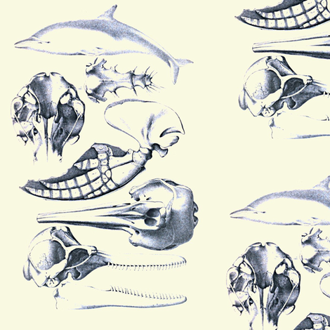 Dolphin_anatomy fabric by nalo_hopkinson on Spoonflower - custom fabric