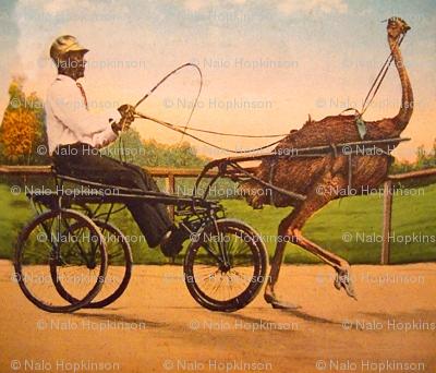 Ostrich Rider
