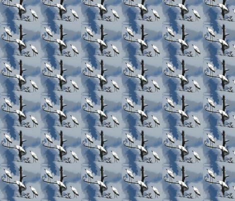 snowy_egret_150