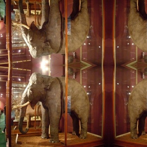 In the Museum:Elephants