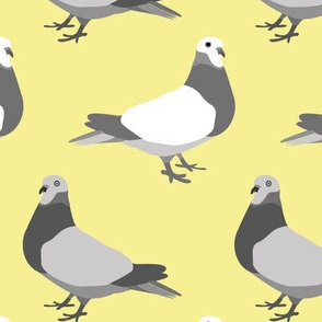A Parade of Pigeons, Yellow
