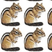 Rchipmunk_ed_shop_thumb