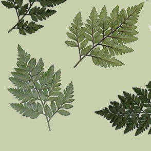 Larger Fern - green background