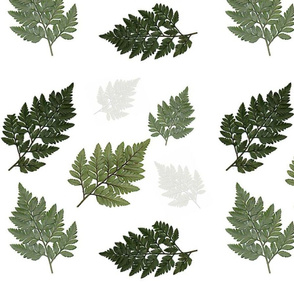 Fern - white background