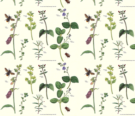 Ourisia__Veronica__etc fabric by maureclaire on Spoonflower - custom fabric