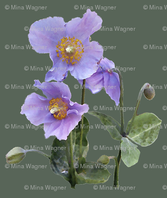 Lilac-poppy-on-sage-green