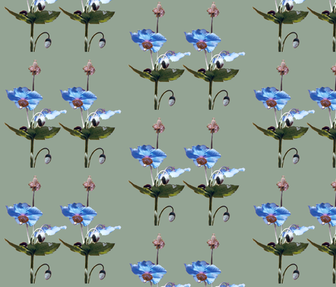 2Blue-poppies-MED-GRN fabric by mina on Spoonflower - custom fabric