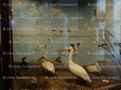 In the Museum: Waterbirds