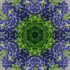 Kaleidoscope Bluebonnets