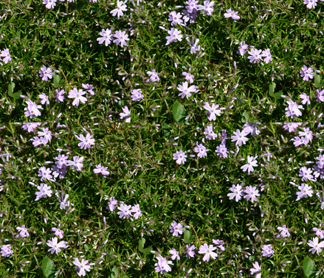 Creeping phlox fabric by serenity_ii on Spoonflower - custom fabric