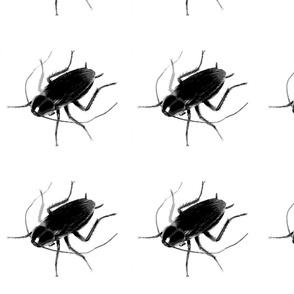 1_roach