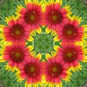 spring-08