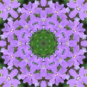 spring-11