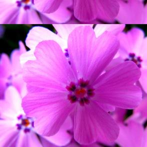pink_circle_of_hearts