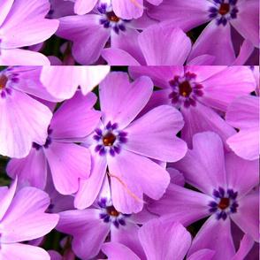 pink_heaven