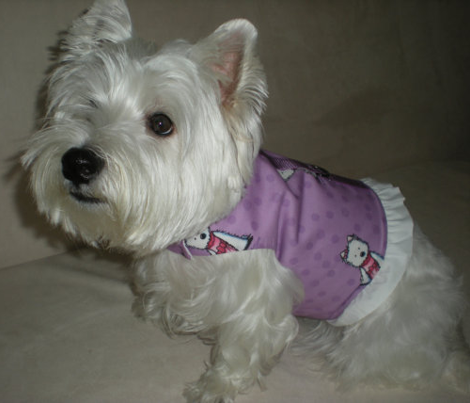 Westie Girls on Purple