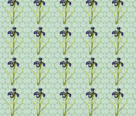 Iris O My Eye fabric by sassy_sue on Spoonflower - custom fabric