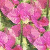 Pink sweet pea