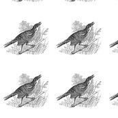 Rbird2_shop_thumb