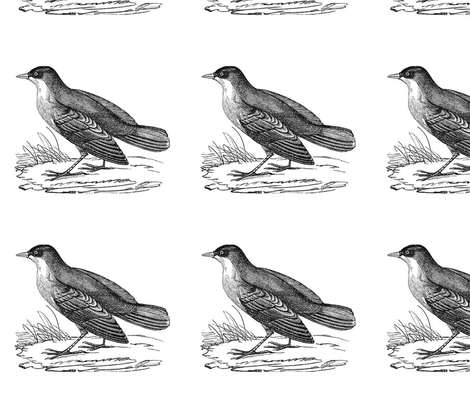 bird3 fabric by earwig on Spoonflower - custom fabric