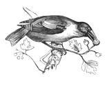 Rbird4_thumb