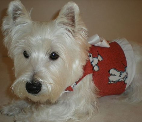 Rrpktfullposes_westies_red_comment_452236_preview