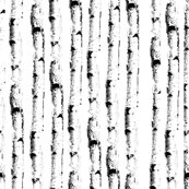 Rrbirches_3_shop_thumb