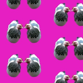 GALLINE_DUO_ON_MAGENTA