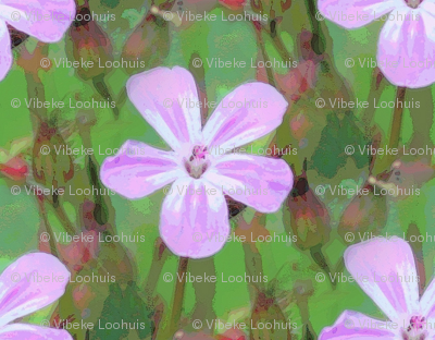 Tiny cranesbill pink & green