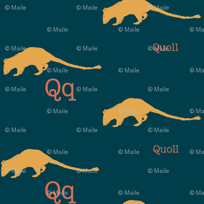 Q is for Quoll