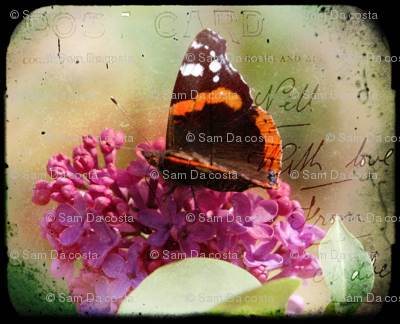 vintage butterfly lilac