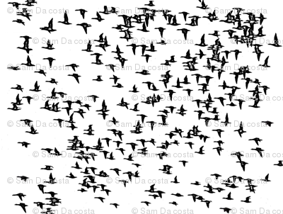 flock_birds_cropped