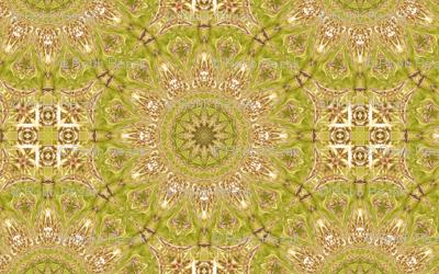 catus_pattern