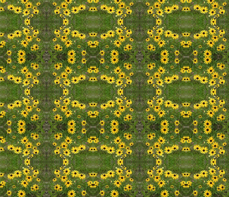 Black Eyed Susans fabric by eelkat on Spoonflower - custom fabric