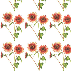 red_sunflowers