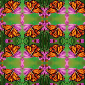 monarchandconeflower__2_