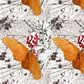 Butterfly2_shop_thumb