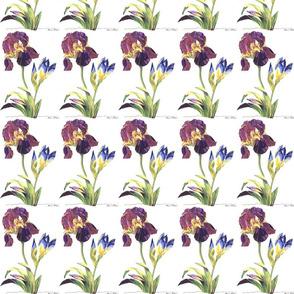 iriscluster