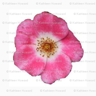 mf_rose_border_6_28_09_004