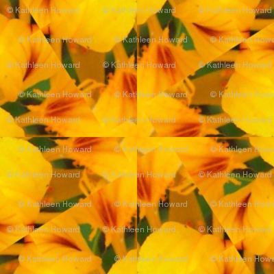 Picnik_collage_4x4-2a_nasturtium