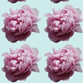 Rrpeony_cut_out_4_shop_thumb