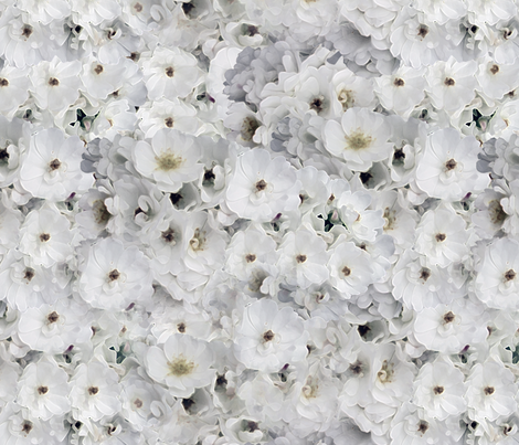 White Wild Rose fabric by kristopherk on Spoonflower - custom fabric