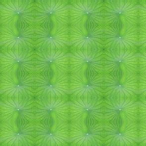 Edgreen_leaf