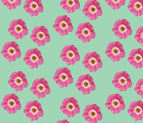Single_roses_picnik_collage_shop_preview