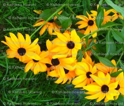 s_edit2_Crop_b_Black_eyed_Susan_sq_ex_c