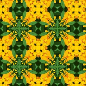 l_crop_2x2_b_45m_crop_a_Picnik_collage