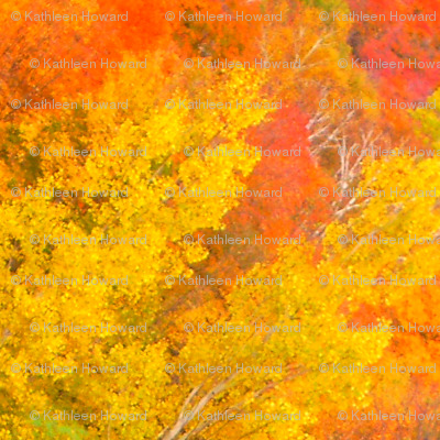 r_45_crop_pair_of_birches___Oct__2009_007