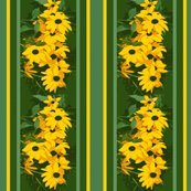 Rblack_eyed_susan_stripe_3_august_1_2009_012_shop_thumb