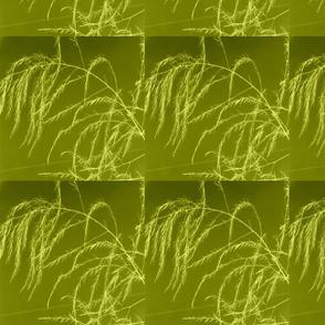 invert_tint_aperagus_fern_003